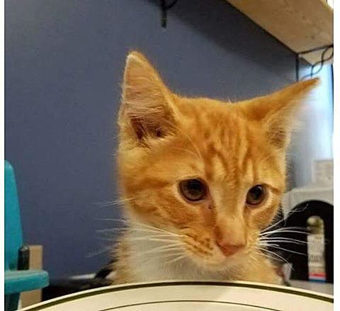 Photo MDI Lost Found Pet Alert